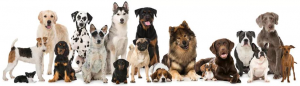 Dog breeds in the UK – Here are the most popular UK breeds