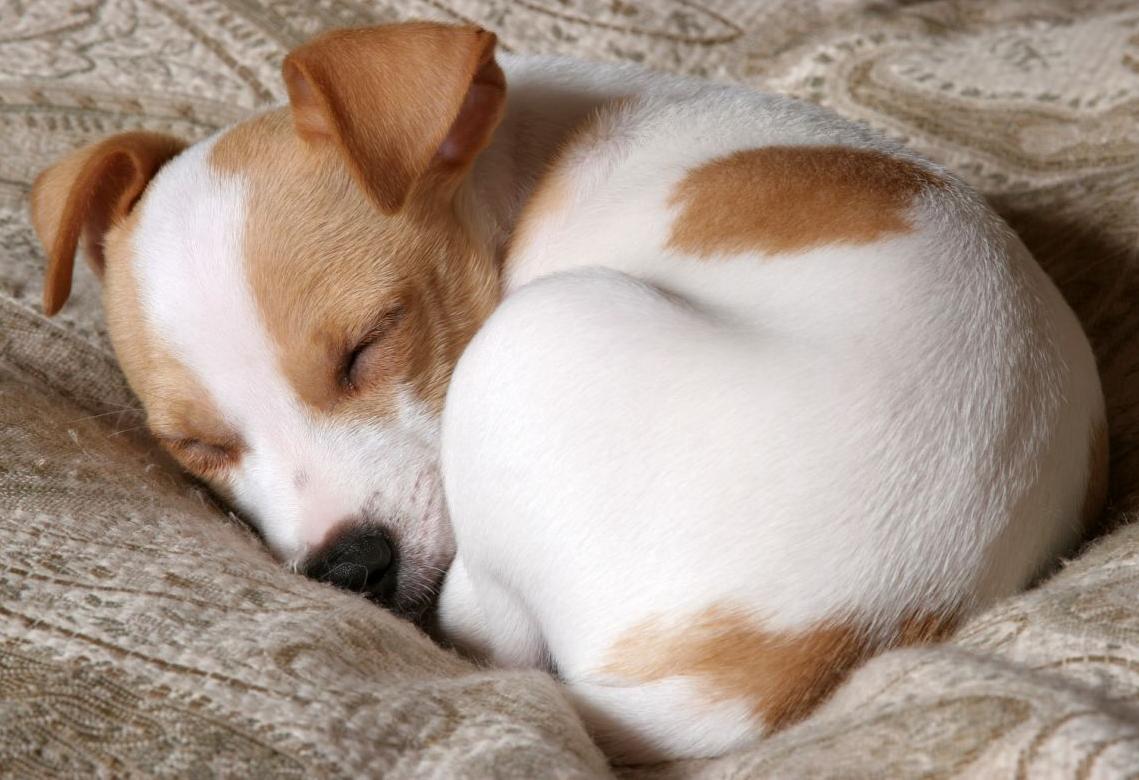 Buying a puppy checklist