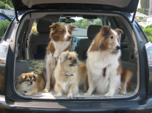 Dog car trips and making them safer