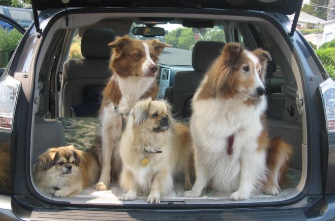 Dog car trips