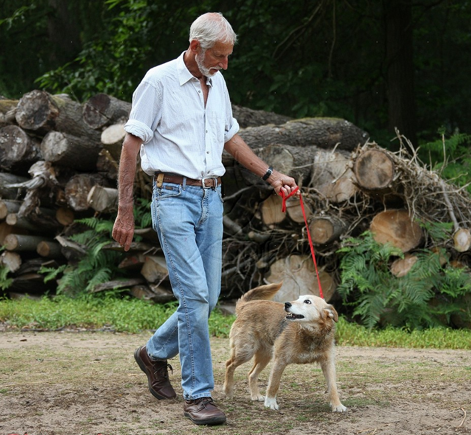 Dog walking for the elderly