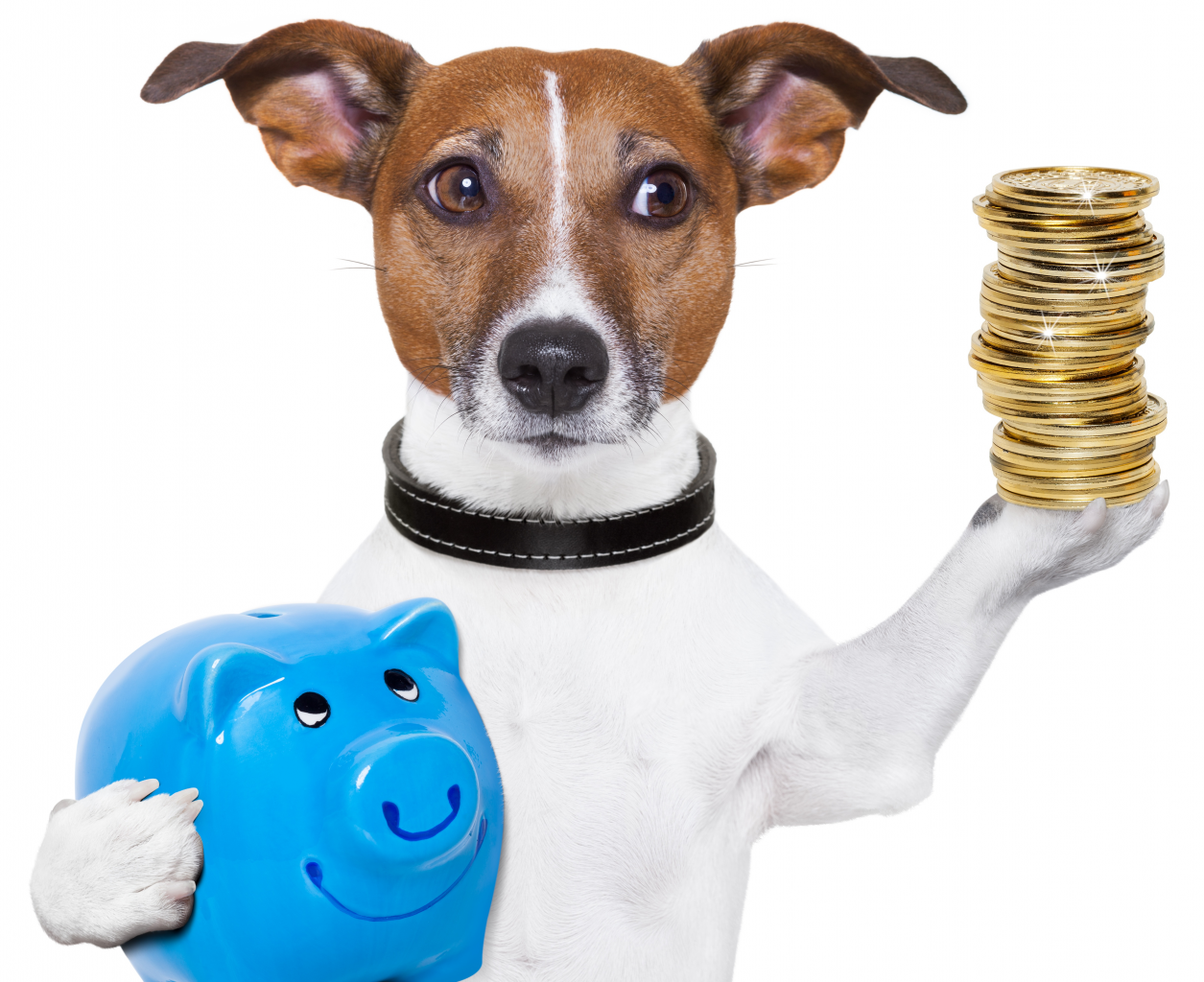 How to own a dog on a budget