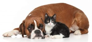 What dog breeds are best suited with cats?